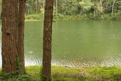 Ruhige Landschaft des Seeuferwaldes Lizenzfreies Stockfoto