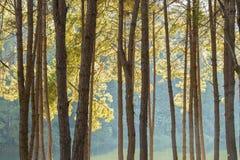 Ruhige Landschaft des Seeuferwaldes Lizenzfreie Stockbilder