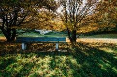 Ruhige Parkbank unter Herbstbäumen Stockbilder