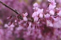 Ruhige rosa Blumen stockbild