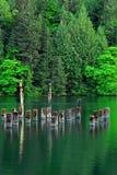 Ruhige Seebucht und -wälder Stockbilder