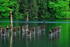 Ruhige Seebucht und -wälder Stockbild