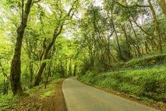 Ruhige Seitenstraße im Wald Lizenzfreie Stockfotografie