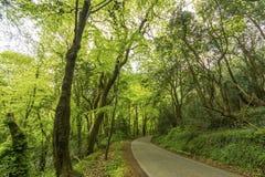 Ruhige Seitenstraße im Wald Lizenzfreie Stockfotos