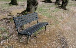 Ruhige Szene mit einziger Parkbank im woodsy Bereich, Kirschblüten auf dem Boden Stockbild