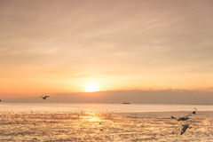 Ruhige Szene mit Seemöwenfliegen auf Sonnenuntergang Lizenzfreies Stockfoto