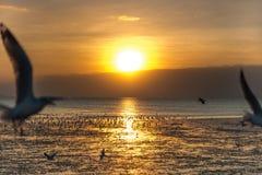 Ruhige Szene mit Seemöwenfliegen auf Sonnenuntergang lizenzfreie stockfotos