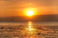 Ruhige Szene mit Seemöwenfliegen auf Sonnenuntergang Lizenzfreie Stockfotografie