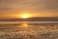 Ruhige Szene mit Seemöwenfliegen auf Sonnenuntergang stockbild
