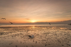 Ruhige Szene mit Seemöwenfliegen auf Sonnenuntergang stockfoto
