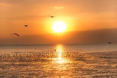 Ruhige Szene mit Seemöwenfliegen auf Sonnenuntergang Stockbilder