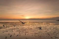 Ruhige Szene mit Seemöwenfliegen auf Sonnenuntergang Stockfotografie