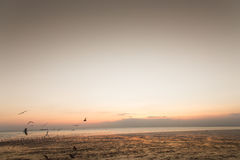 Ruhige Szene mit Seemöwenfliegen auf Sonnenuntergang lizenzfreies stockbild