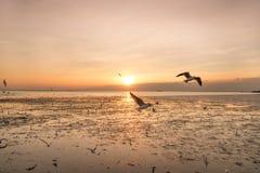 Ruhige Szene mit Seemöwenfliegen auf Sonnenuntergang lizenzfreie stockbilder