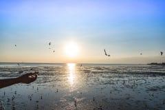 Ruhige Szene mit Seemöwenfliegen bei Sonnenuntergang Lizenzfreies Stockbild
