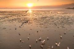 Ruhige Szene mit Seemöwenfliegen am sunseton stockbilder