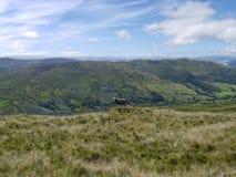 Ruhige Szene von einzigen Schafen auf Hügel Stockfotografie
