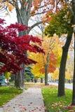 Ruhiger Bürgersteig und bunte Blätter Stockbild