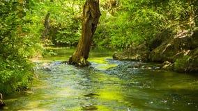 Ruhiger Fluss, der friedlich in grünen Wald fließt stock video footage