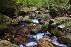 Ruhiger Fluss mitten in Wald Stockfotos