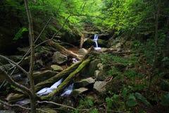 Ruhiger Fluss mitten in Wald Stockfotografie