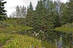 Ruhiger Garten mit Teich Stockbilder