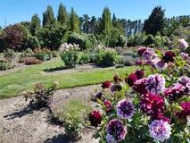 Ruhiger grüner Garten mit purpurroten Blumen stockfotos