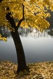 Ruhiger Herbst Stockbild