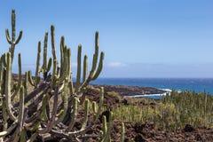 Ruhiger Kaktus im vulkanischen Bereich vor Küstenlinie von Teneriffa-Insel, Kanarienvogel, Spanien Lizenzfreies Stockfoto