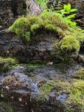 Ruhiger kleiner Wasserfall lizenzfreie stockbilder
