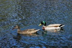 Ruhiger Nachmittag bei Kenneth Hahn State Recreation Area, Los Angeles lizenzfreie stockbilder