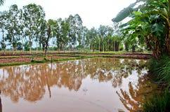 Ruhiger Reispaddy in ländlicher Sakon- Nakhonprovinz in Nord-Thailand Lizenzfreies Stockbild