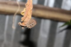 Ruhiger Schmetterling in der ruhigen Position lizenzfreie stockbilder