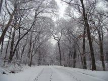 Ruhiger schneebedeckter Weg stockfotos