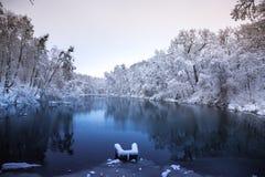 Ruhiger See im Wald Lizenzfreie Stockbilder