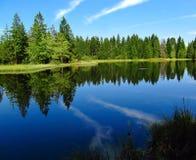 Ruhiger See mit Bäumen Lizenzfreies Stockbild