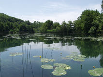 Ruhiger See mit Wolken und Bäumen reflektierte sich im Wasser Stockfoto