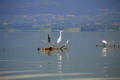 Ruhiger See und Vögel Stockbild