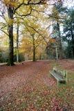 Ruhiger Sitzbereich im Herbst forset Lizenzfreie Stockfotografie