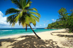 Ruhiger Strand mit Palme Stockfotos
