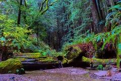 Ruhiger Strom im kalifornischen Rotholzwald Lizenzfreie Stockbilder