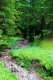 Ruhiger Strom mitten in einem Wald Stockfoto