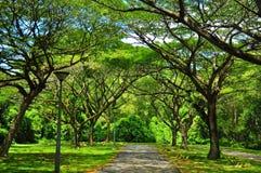 Ruhiger und ruhiger Gehweg Pasir Ris am Park Lizenzfreie Stockfotos