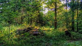 Ruhiger Wald Stockbilder