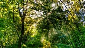 Ruhiger Wald Stockfotos