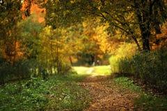 Ruhiger Wald des Herbstes stockbilder