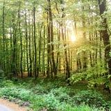 Ruhiger Wald in Deutschland Lizenzfreies Stockfoto