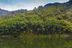 Ruhiger Wald und See Stockfotografie