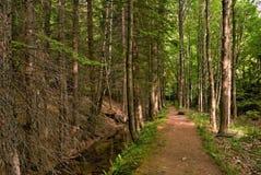 Ruhiger Waldweg Lizenzfreie Stockfotos
