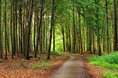Ruhiger Waldweg Lizenzfreie Stockbilder